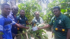 Biosecurity officers investigate alleged beetle incursion on Noni