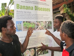 Makira farmers learn about overseas banana diseases