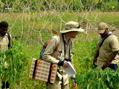 Pest survey in Cassava crop