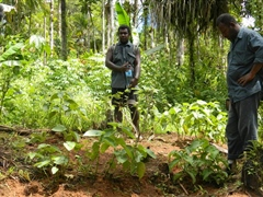 Inspecting Kava crop for possible diseases